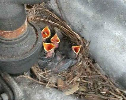 nest-im motor